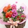 ☆カーネーション☆と季節の花鉢ピック付き
