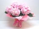 《母の日大人気アジサイ》ピンクダイアモンド