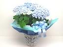 いつも優しいお母さんに・・・淡いブルー優しい紫陽花