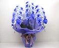 【母の日】紫色の胡蝶蘭《パープルエレガンス/3本立》