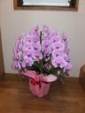 ピンク胡蝶蘭の鉢