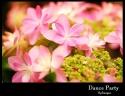 お母さんへ 「紫陽花:ダンスパーティー」