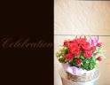 赤バラを使って おまかせアレンジメント 129