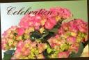 母の日の贈り物に♪ 紫陽花 『シティーラインパリ』