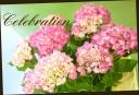 母の日の贈り物に♪ 紫陽花 『ハワイアンピンク』