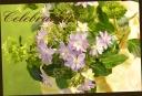 母の日に紫陽花 「ダンスパーティー ブルー」