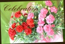 母の日定番♪ カーネーションの花鉢 2鉢セット