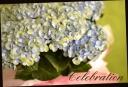 お母さんへ贈る 紫陽花.『マジカルブルー』