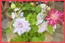 お勧め花鉢 クレマチス ミックス