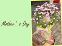 マネケンワッフルとバラ(舞姫)の花鉢セット