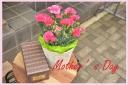 マネケンワッフルとPカーネーションの花鉢セット