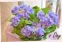 お母さんへ 紫陽花『スターリットスカイ』