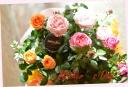 母の日ギフト ミニバラ3鉢セット