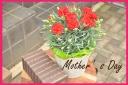 マネケンワッフルと赤カーネーションの花鉢セット