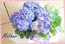 母の日ギフト♪ 紫陽花『スパークル』