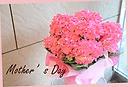 母の日ギフト 紫陽花「カーリースパークル」