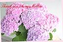 母の日ギフト♪ 紫陽花「ごきげんよう」