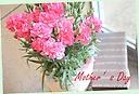 マネケンワッフルとカゴ付Pカーネーションの花鉢