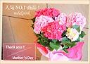 母の日ギフト♪紫陽花『レッドピンク』