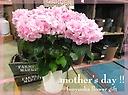 母の日に!ピンクのアジサイ【 ふわり 】