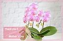 母の日に!ピンクの胡蝶蘭【 ラブリーエフェクト 】