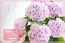 オシャレな紫陽花♪ 【コットンキャンディー2】