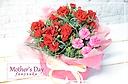 母の日定番!2色のカーネーションの花鉢◎