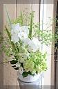 胡蝶蘭と緑たっぷりのアレンジメント