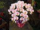淡いピンク 造花こちょうらん 光触媒