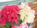 ブーゲンベリア 桃花と白にさし色ピンク 寄せかご