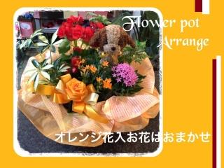 わんちゃんオレンジ系☆季節のおまかせ寄せ籠中サイズ
