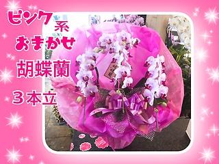 *。:+ピンク系品種おまかせ胡蝶蘭゜*。:3本立ち♪