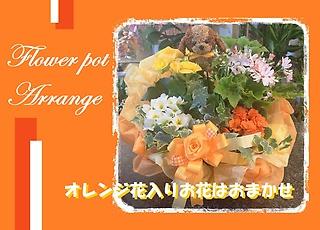 わんちゃんオレンジ系★ボリューミーおまかせ★寄せ籠