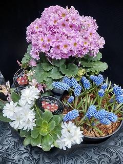 ~春のいぶき(花鉢セット)~