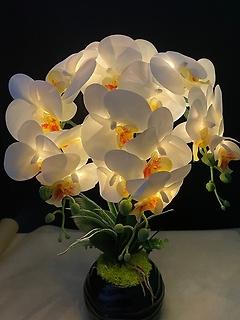 ☆煌めく輝き!LEDライト胡蝶蘭☆