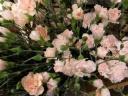 ピンク系スプレーカーネーションの花束