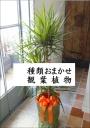 種類おまかせ観葉植物