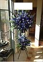 ブルー・パープル2段スタンド