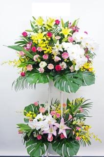 華やか2段!胡蝶蘭3本入り豪華御祝スタンド花