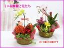 ミニコチョウランと花たち(内容おまかせ)