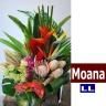 Moana LL