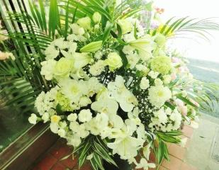 胡蝶蘭と白バラの供花アレンジ・特大『初雪』