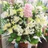 『彩雪』洋蘭とカサブランカの供花アレンジ・大