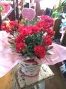 カーネーション鉢花