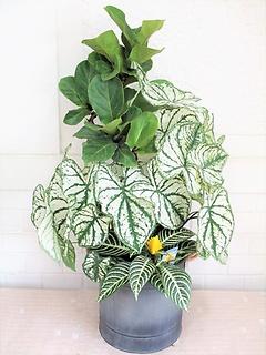アートプランツ 観葉植物