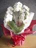 胡蝶蘭の鉢植え