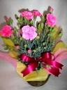 可愛いピンクの鉢植えケース入り