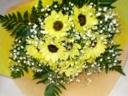 夏のお花ヒマワリ