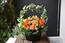 お花おまかせオレンジ系アーチアレンジメントMサイズ