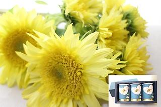 【お茶3缶セット】ひまわりの花束